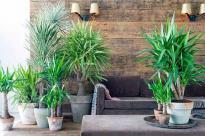 Юкка: универсальное растение с покладистым характером